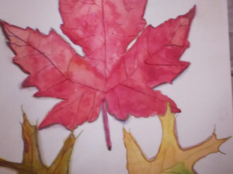 watercolor painting of maple and oak leaves